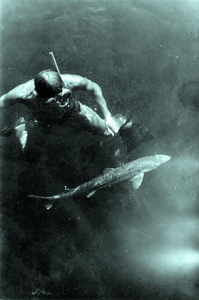 Ныряльщик и акула - катран